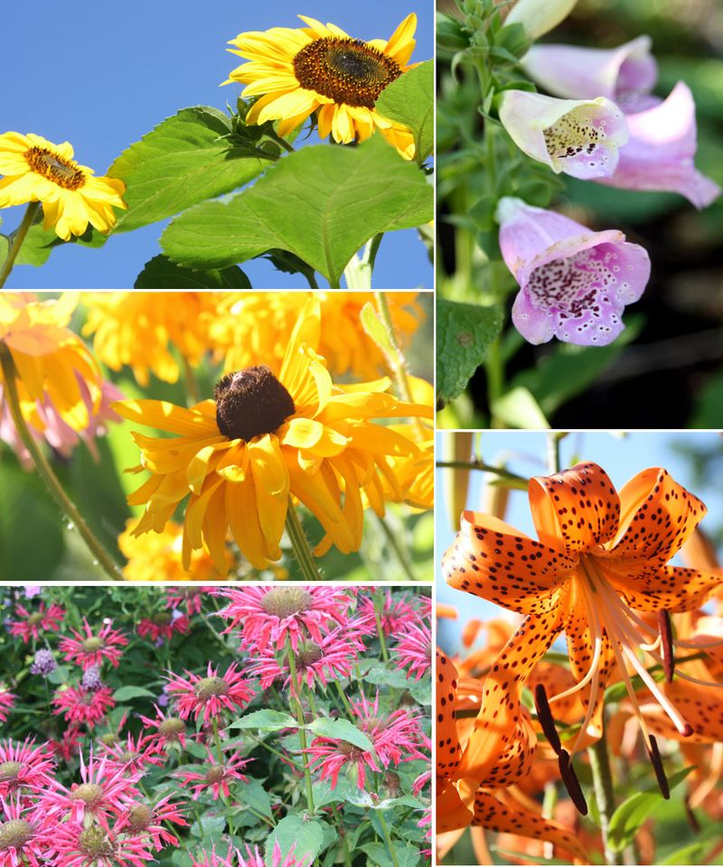 Flowers071710