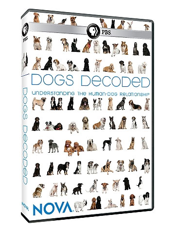 DogsDecoded