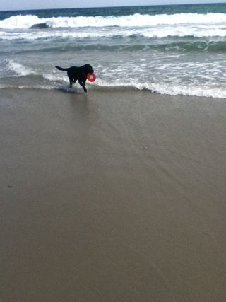 Mac @ Myrtle Beach