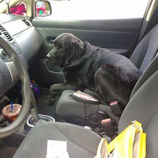 Balt in the Car