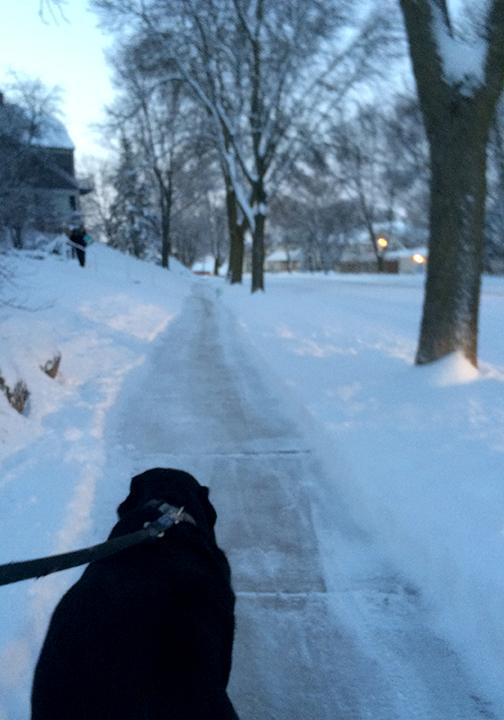 SnowyMonday