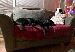BaltSleeping