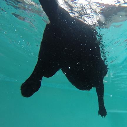 Balt Underwater