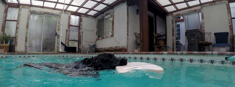 Balt Swimming