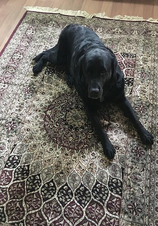 Balt on Carpet