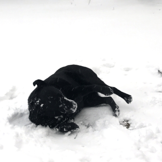 Balt loves the Snow