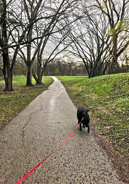 Spring Dogwalk