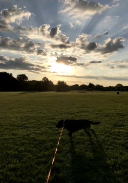 Morning Dogwalk