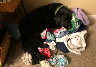 Balt with dirty clothes