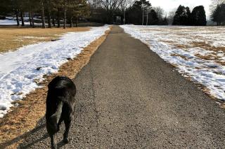 Balt dogwalk