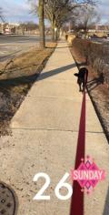 Sunday Dogwalk