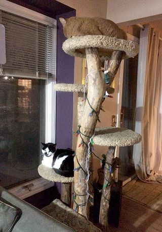 CatTree