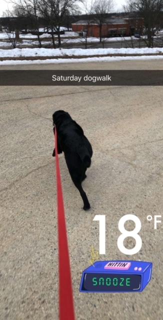 Saturday Dogwalk