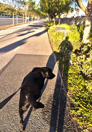 California Dogwalk