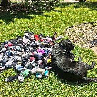 Dog with Socks