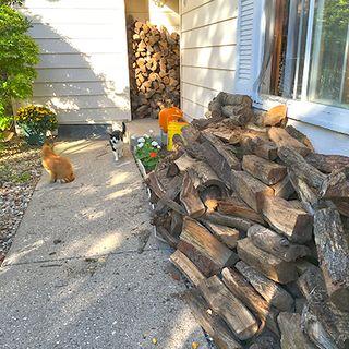 Stacks of wood