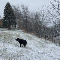 Balt and Snow