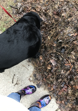 Wet dogwalk