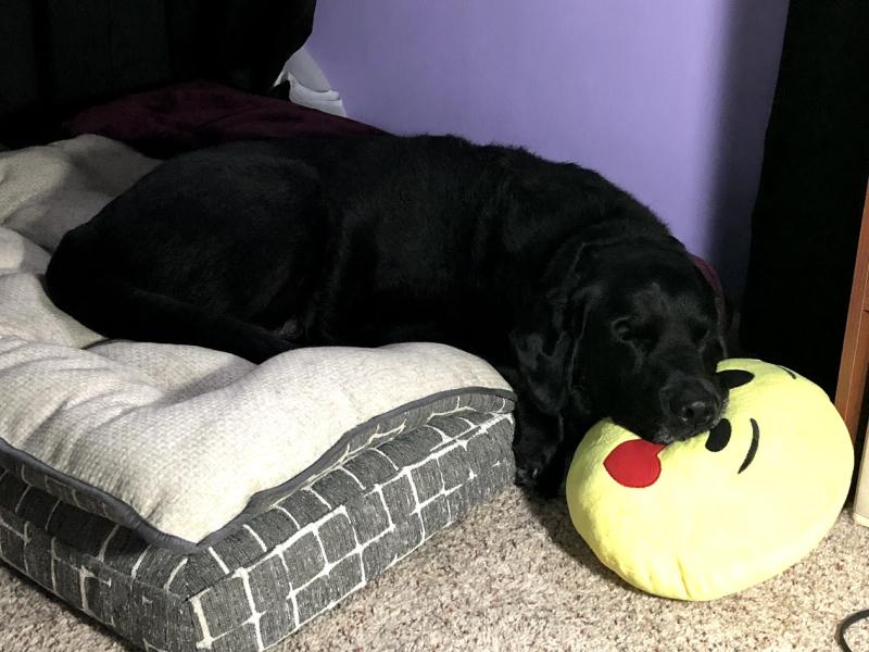 Balt's Pillow