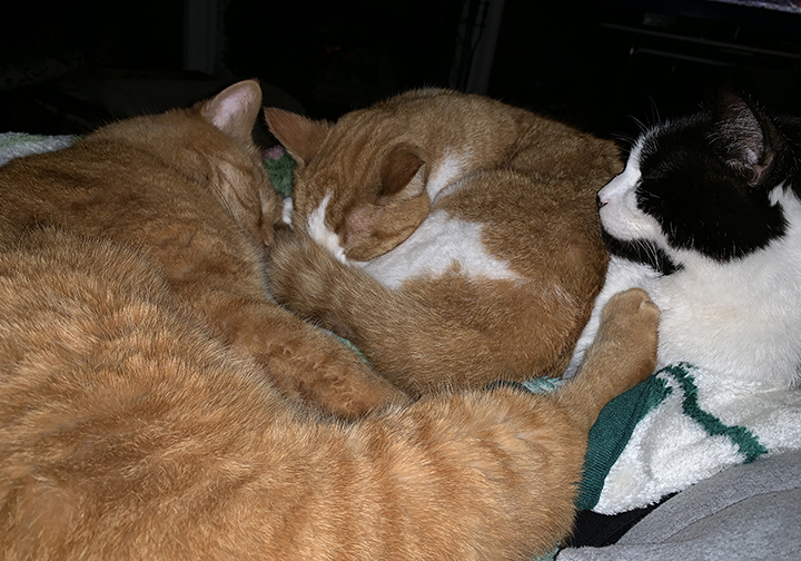 3 cats on my lap