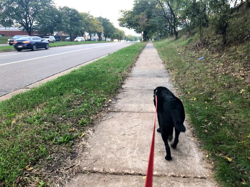 Walking Balt