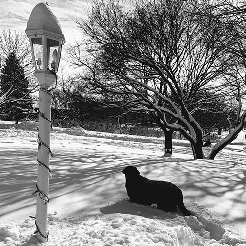 Balt in the snow