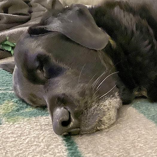 Sleepy Balt