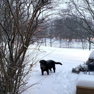Balt more Snow