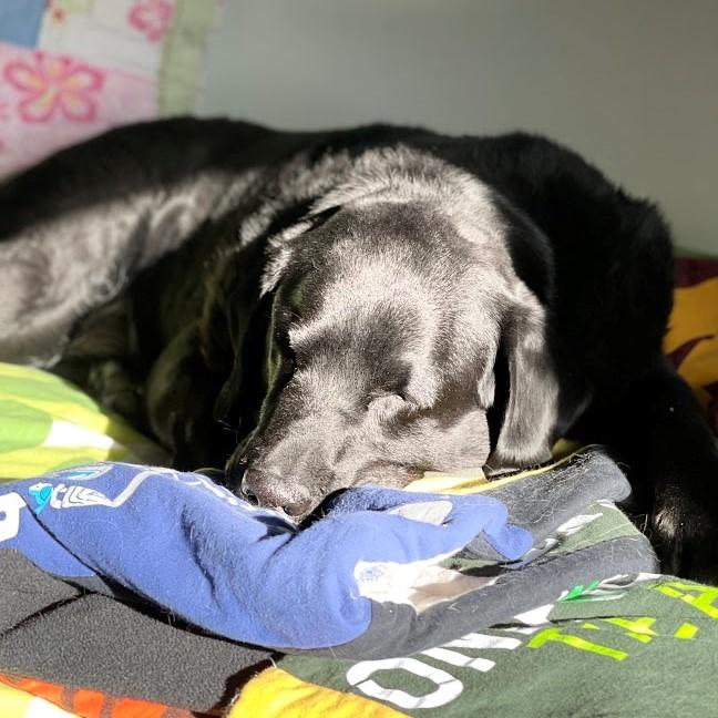 Balt in bed (2)