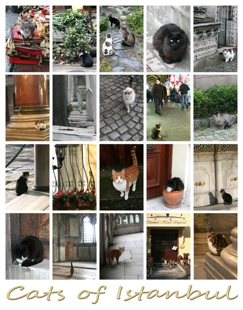 Cats of Istanbul #1