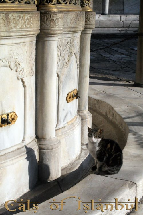 Cats of Istanbul Series