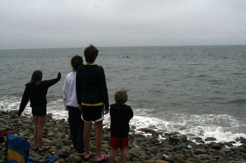 Watching dolphins pass by, 2009